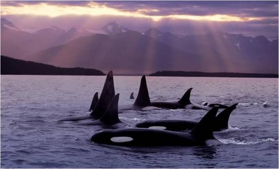 Foto baleias